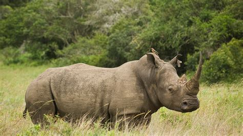 Rhino Conservation Safari in the Eastern Cape | andBeyond