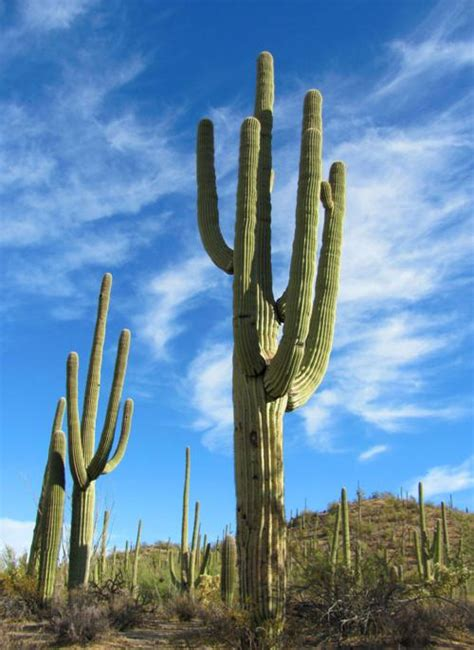 Tucson weather: The cool-down is here! | Local news